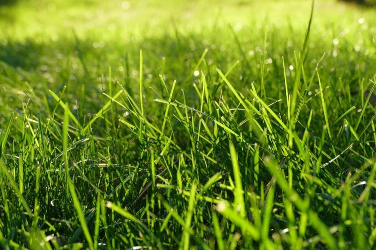 grass-1147851_960_720