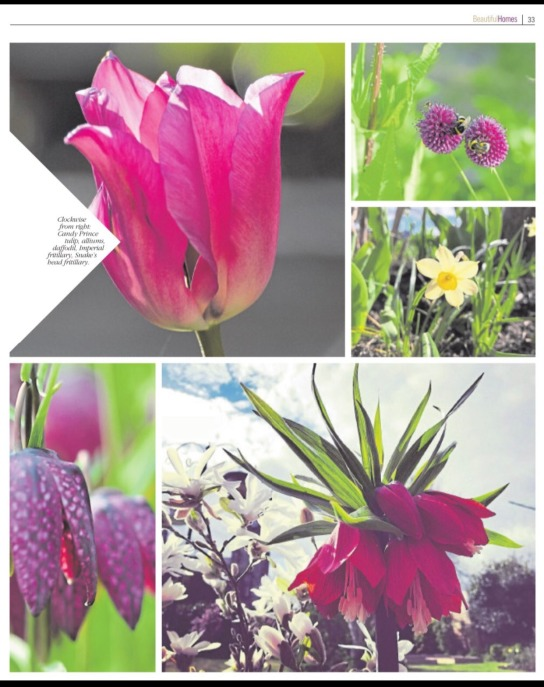 alternative bulbs pg2 sept 2018